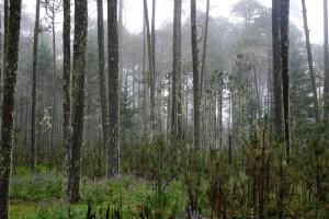 2010_04_Año_bosques-1