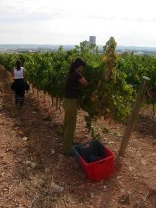 2011_04_MARM_anteproyecto_agrarias