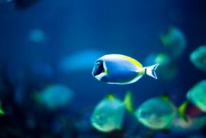 Pesca_fotopedia